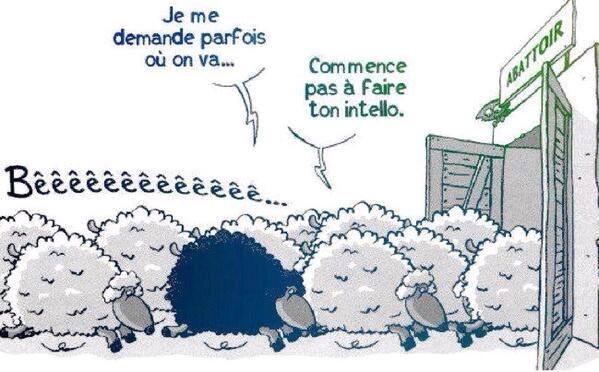 Moutons_blancs_idiots_vs_mouton_noir_intello